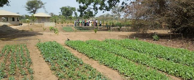 ASTI a sostegno delle donne contadine in Senegal