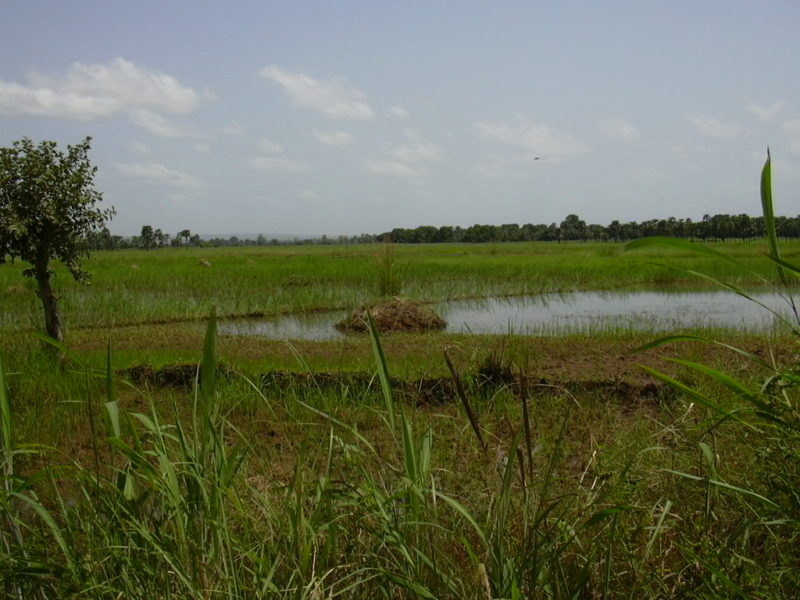 campo riso Burkina