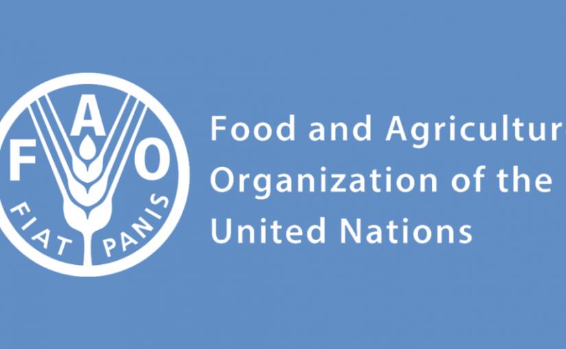 La fame nel mondo non accenna a calare – il rapporto dell'ONU